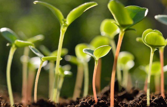 seed-germination